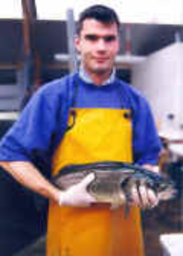 Sea bass used for reproduction in laboratory