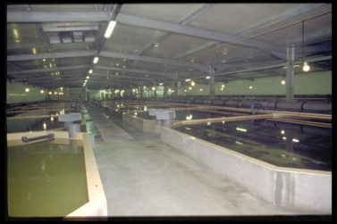 Turbot farming in a recirculating system in the Côtes d'Armor (Brittany) © Ifremer/M. Gouillou