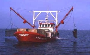 Dredging boat for deep water culture of flat oyster